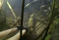 Любительское видео охоты на щуку.