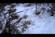 нора лисицы
