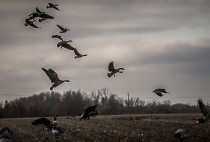 Летящие гуси
