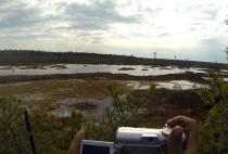 Охота на болоте на гуся