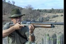Охотник с гладкоствольным ружьем целится в кабана