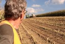 Охотник на кукурузном поле.