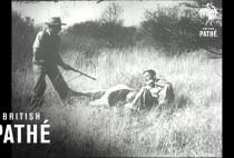 Охотники рядом с убитым львом