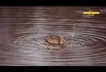 Утка плывет в реке