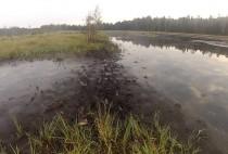 Торфяные болота, место охоты на уток