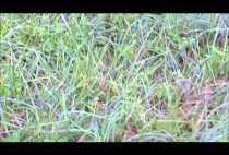 Поле на котором живут сурки
