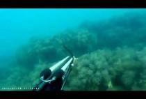 Охотник преследует рыбу