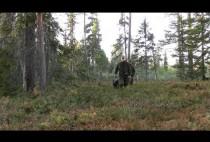 Охотники с лайками идут на охоту на глухаря