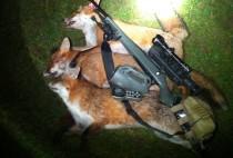 Охотничий карабин и убитая лиса