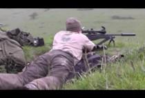 Дальтний выстрел по лису на охоте