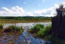 Большое утиное озеро