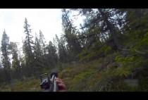 Охотник целится в лося