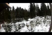 Зимний лес - место обитания лис