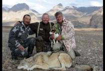 Охотники возле волка