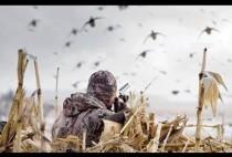 Охотник целится в уток