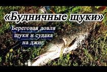 Пойманная щука в траве
