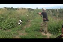 Охотники с собакой разыскивают перепела