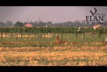 Косуля на поле
