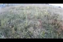 Поле на котором проходит охота на перепела