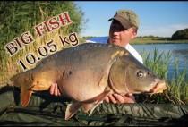 Толстый карп в руках рыбака