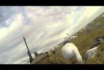 Охотники на водоплавающую дичь на видео