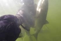 Рыбак поднимает рыбу к поверхности