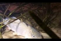 Рыбка под водой