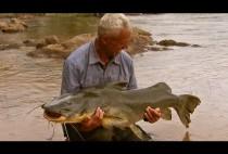 Рыбак держит в руках пойманного сома