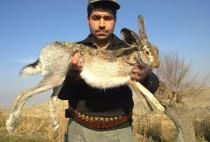 Охотник держит зайца