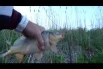 Рыбак держит в руке карпа