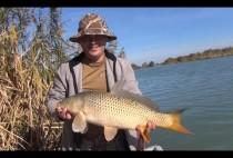 Рыбак держит сазана в руках