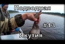 Охотник держит утку за голову