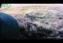 Охотники на куропаток идут по полю