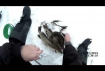 Рыбак с рыбами около лунки во льду
