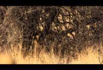 Пейзаж арианского буша