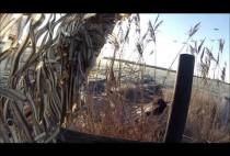 Охотник в засидке на гусей