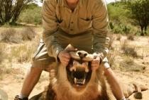 Охотник демонстрирует пасть льва