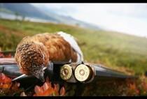 Добытая охотниками куропатка на ружье