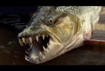 Ловля рыбы на реке Конго
