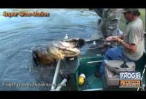 Охотники затаскивают аллигатора в лодку
