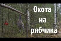 Осенний лес в Сибири