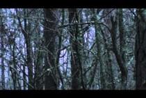 Зимния лес
