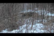 Бобер в заснеженном лесу