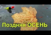 Осенний лис в воде
