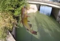 Рыбак ловит сома в пруду