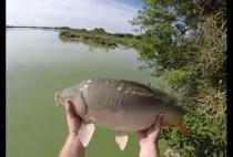 Карп в руках рыбака