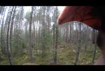Пейзаж Шведского леса
