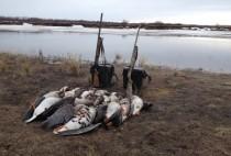 Охотники добыли несколько гусей