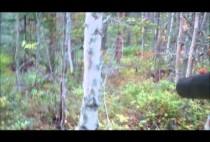 Охотник пробирается по лесу