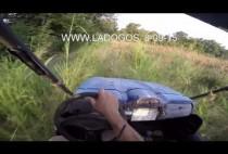 Охотники преследуют кабанов